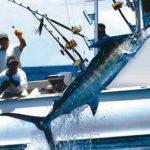 Miami_sportfishing-1.jpg