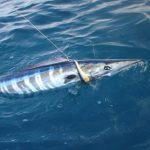 Wahoo_fishing_Miami-1.jpg